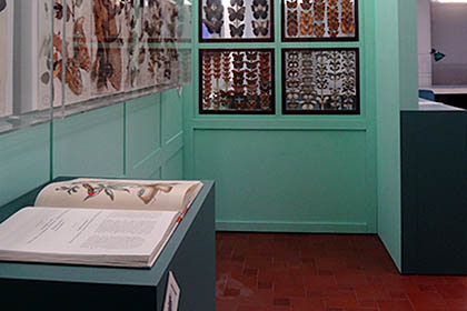 Beauty & The Beasts Exhibition – Manchester Museum – Build & Installation